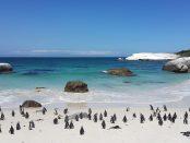 penguins-857206_1280